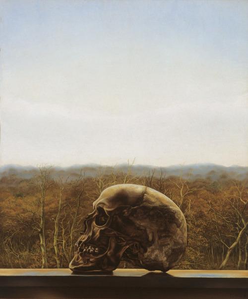 Skull In Forest
